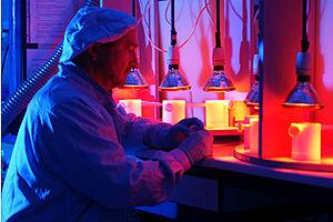 Ein Mann sitzt im Labor vor Wärmelampen, unter denen Gefäße stehen.
